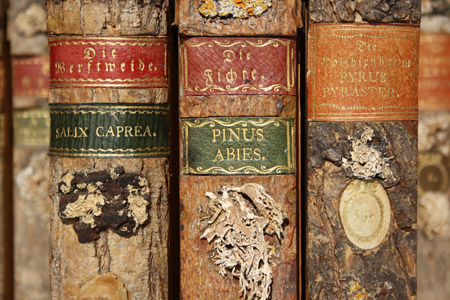 Xylotheque: A Library Full of Books With Leaves, But No Pages