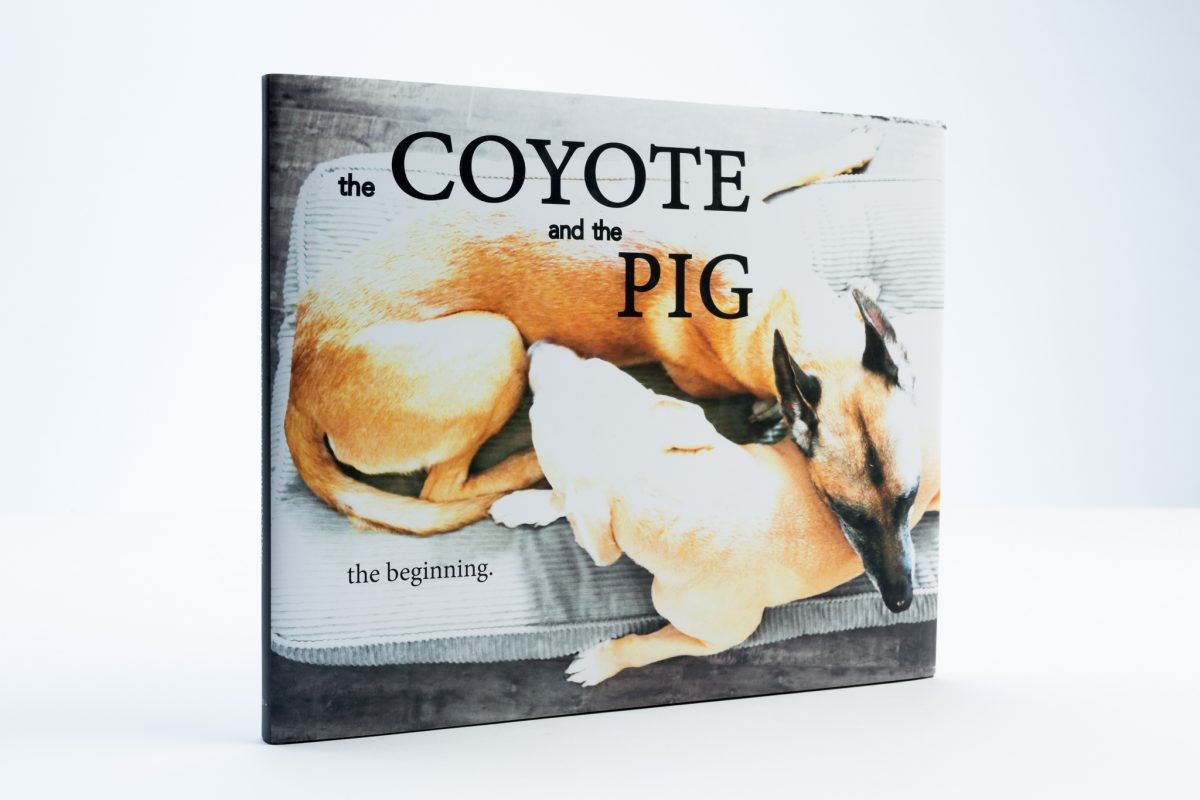 The Coyote and the Pig